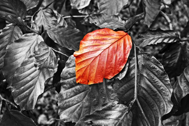 leaf-3087495