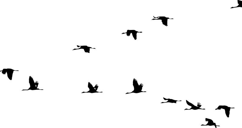 animals-2022610