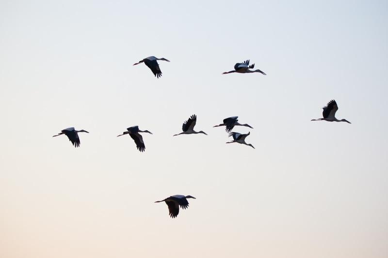 birds-1624407