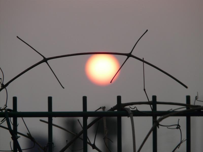 sun-55518