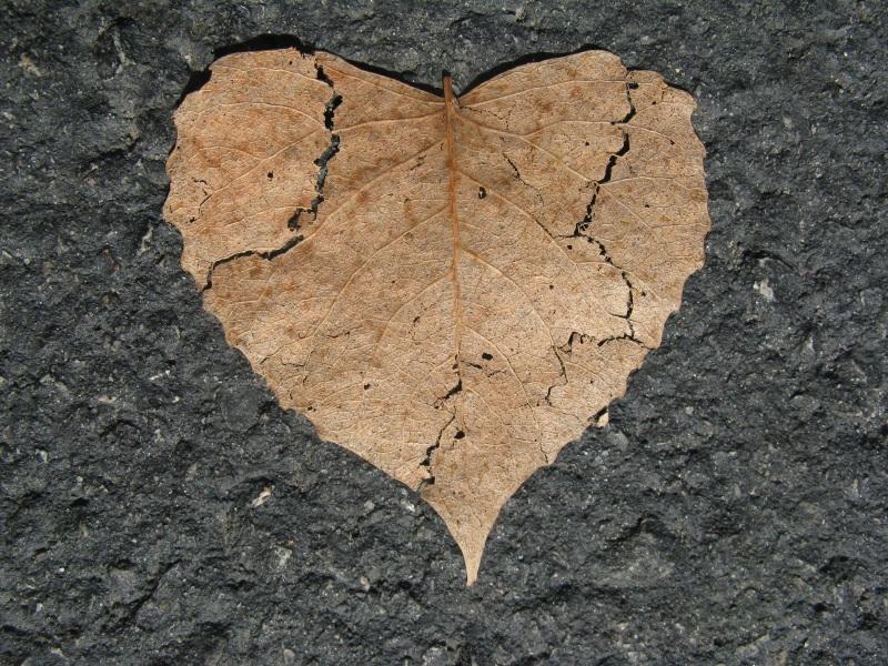 heart-742712