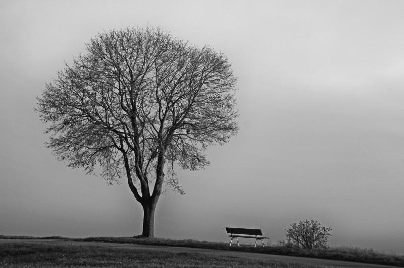 tree-554391