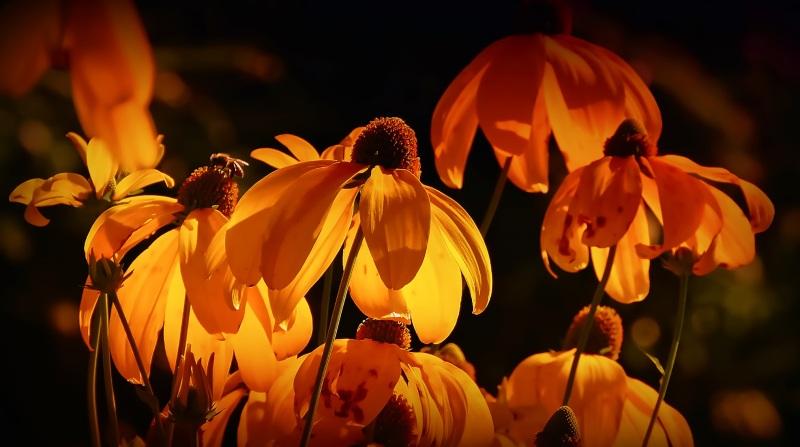 flowers-3215188